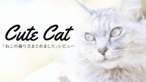 猫写真の本ならコレ!「ねこの撮り方まとめました!」を読んで猫を撮影したよ!