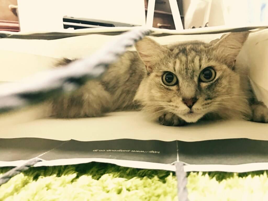猫写真 スマホで撮影