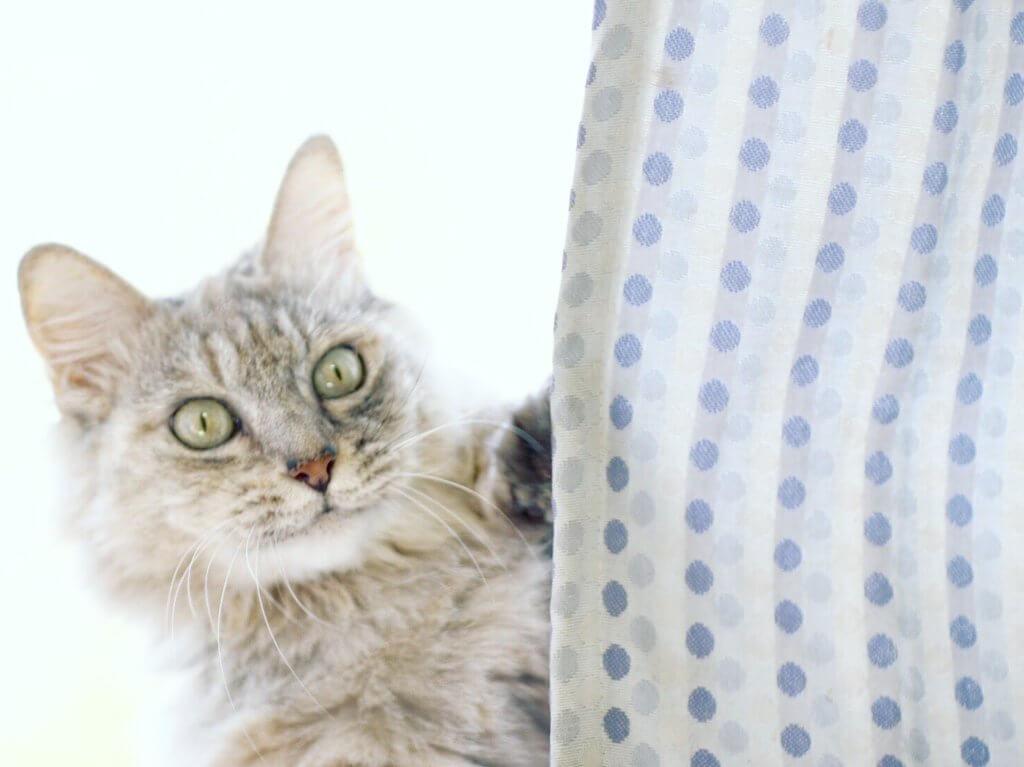 猫 二分割構図 写真