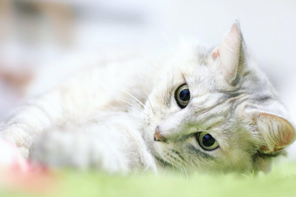 猫の撮り方まとめましたを見た後の猫写真