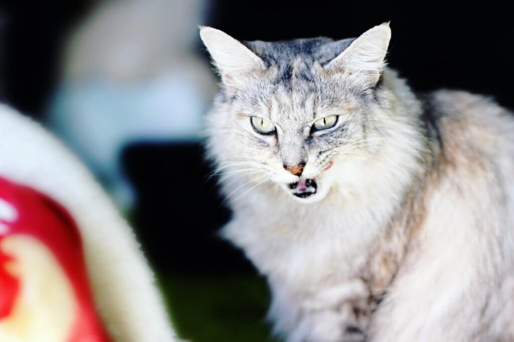 猫の撮り方まとめましたを見る前の猫写真
