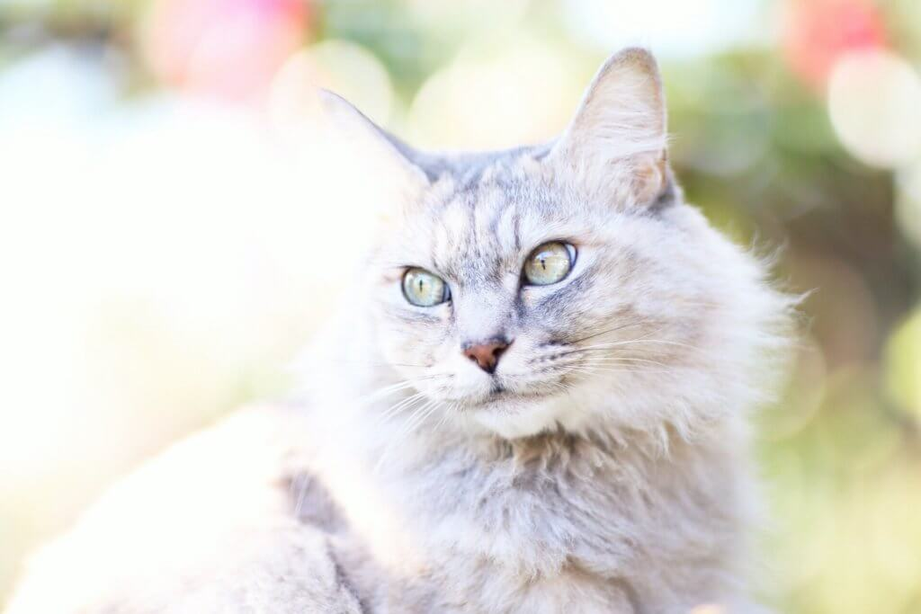 猫 写真 美しい