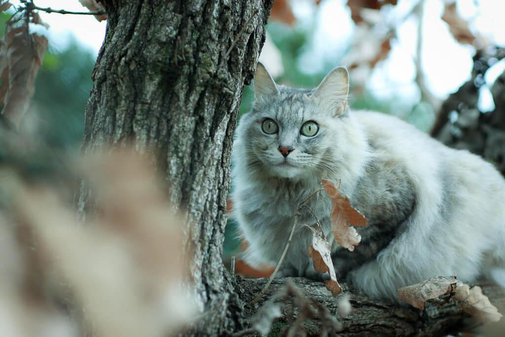 猫 ピント 目