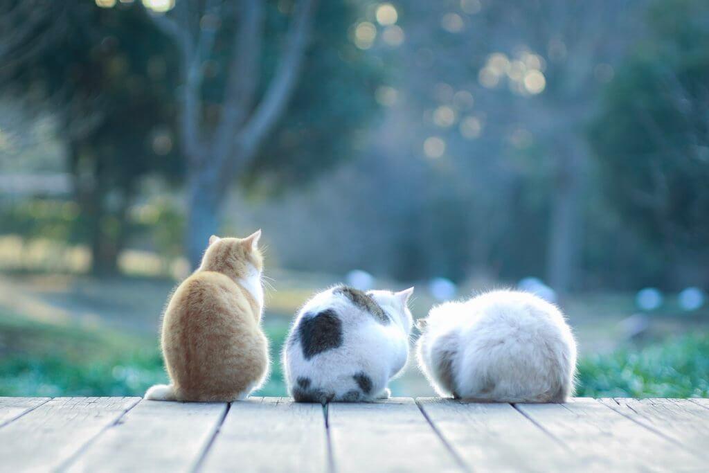 中一光学レンズ「SPEEDMASTER 85mm F1.2」作例 猫
