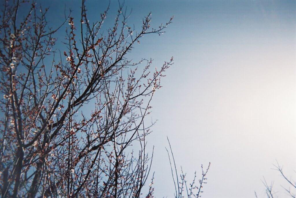 写ルンです 空と花