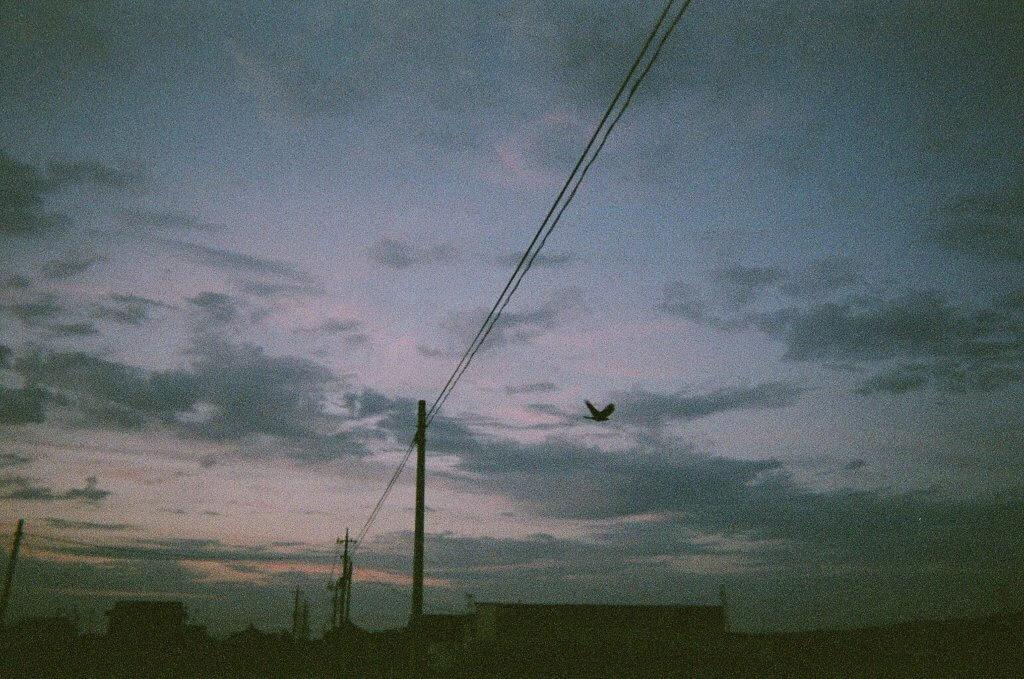 電線 夕方 鳥 写真