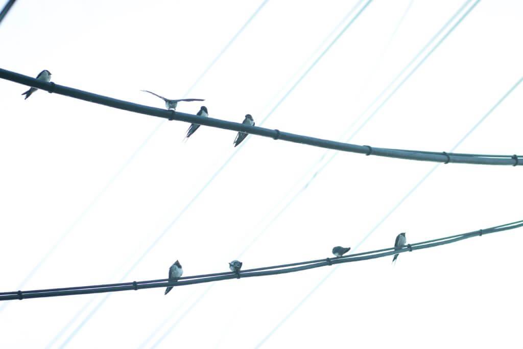 電柱 燕 写真