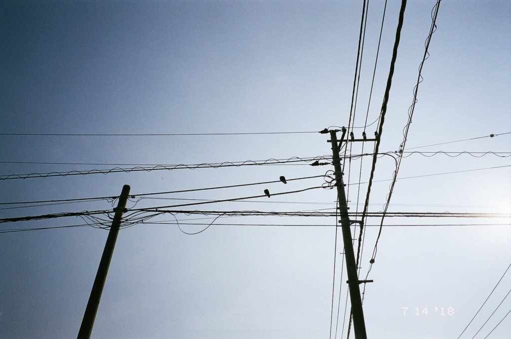 電柱 写真 鳥
