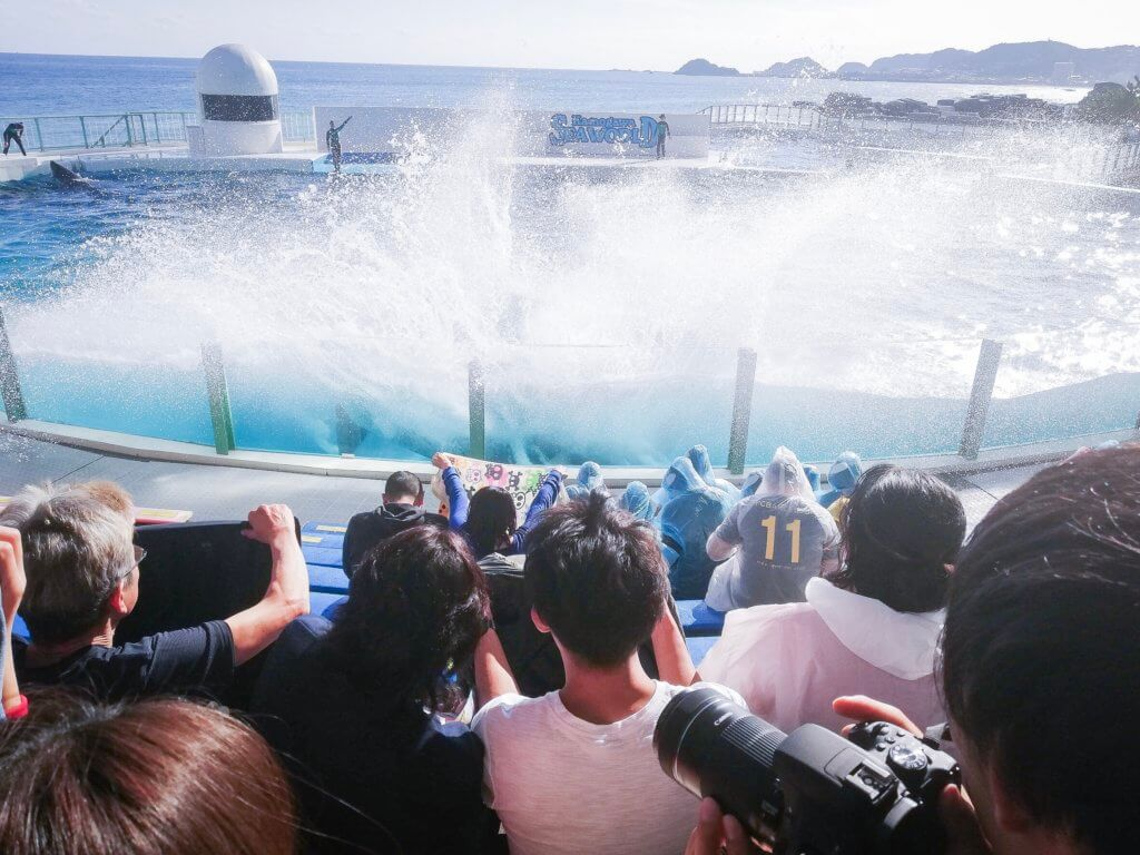 鴨川シーワールド シャチ 水しぶき