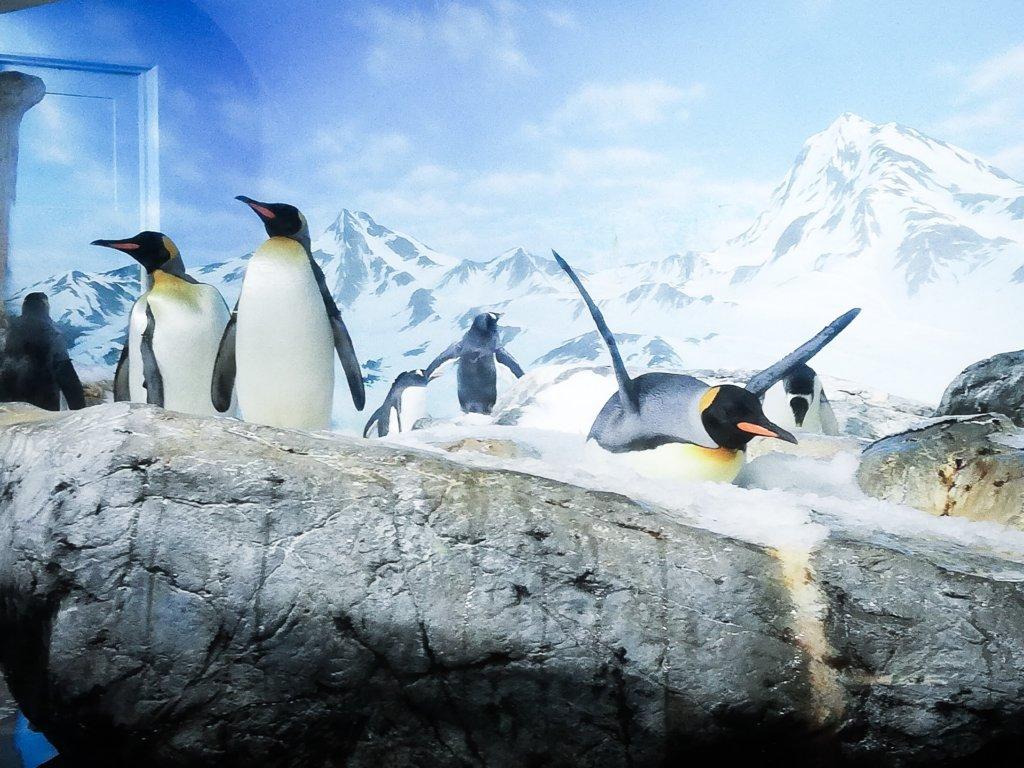 鴨川シーワールド ペンギン 可愛い
