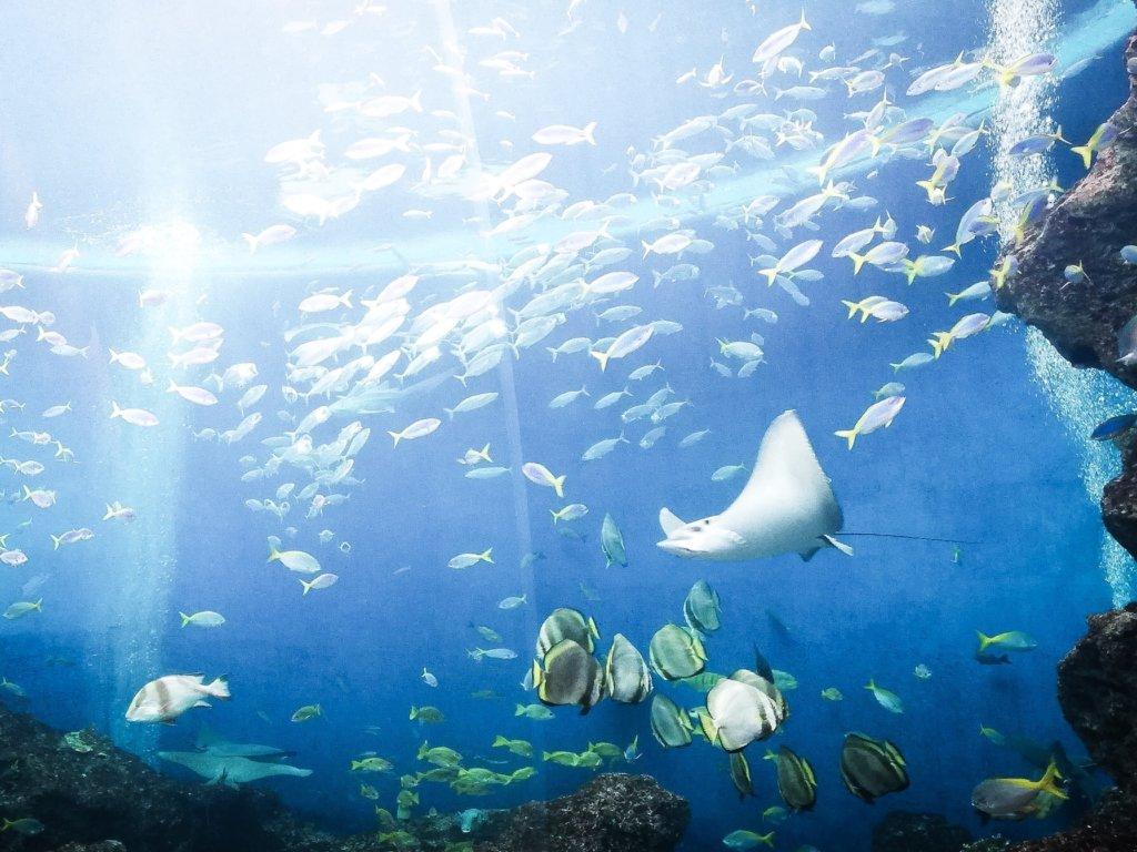 鴨川シーワールド 水族館