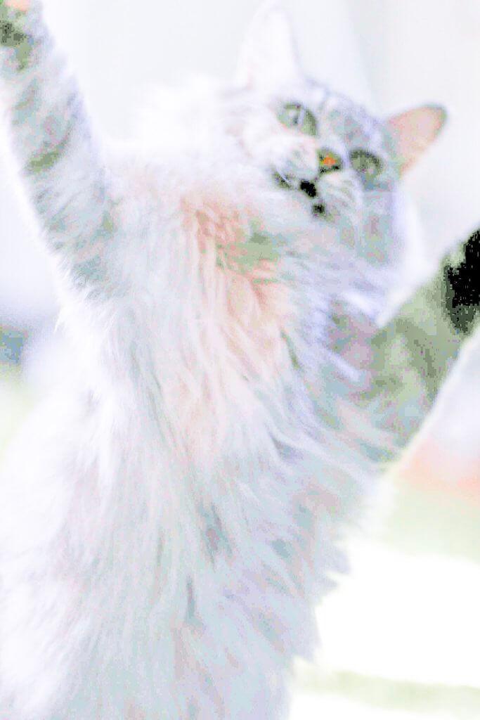 猫写真 ブレる