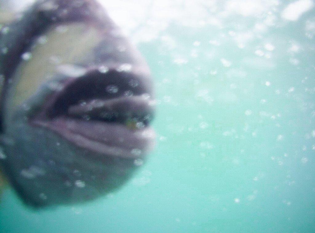 宮古島 シュノーケリング 魚に噛まれた