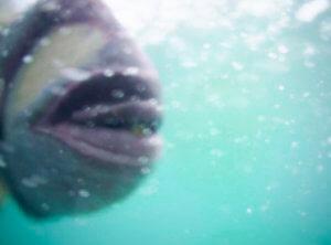 宮古島でシュノーケリングしてたらゴマモンガラとかいうデカい魚に噛まれた。