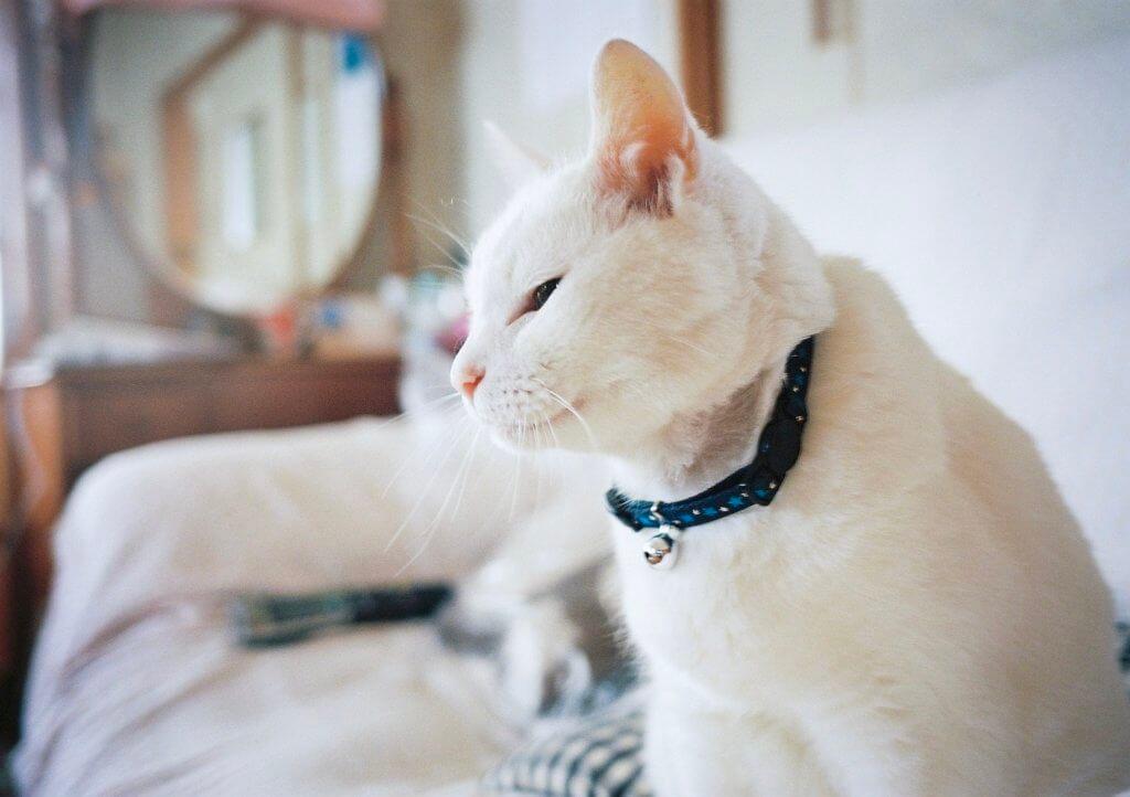 KLASSE W 作例 猫