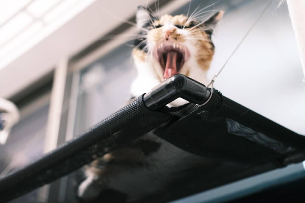 猫 おしっこシート キラキラ 病院