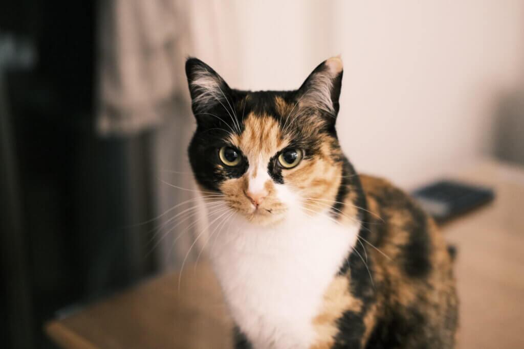 猫 おしっこシート キラキラ 尿路結石