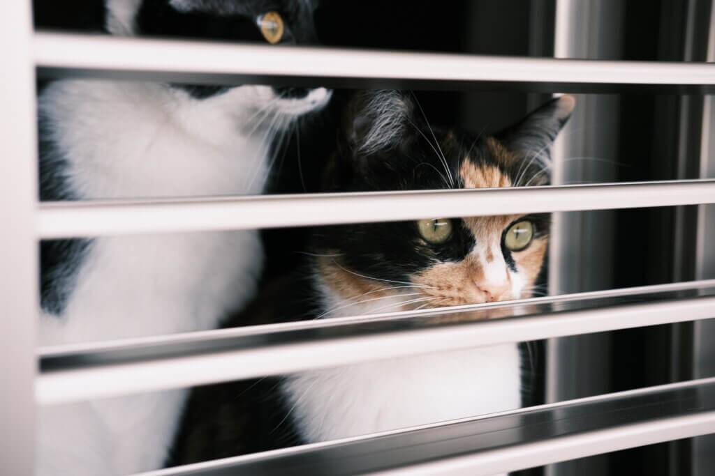猫 おしっこシート キラキラ いつもの状態を把握
