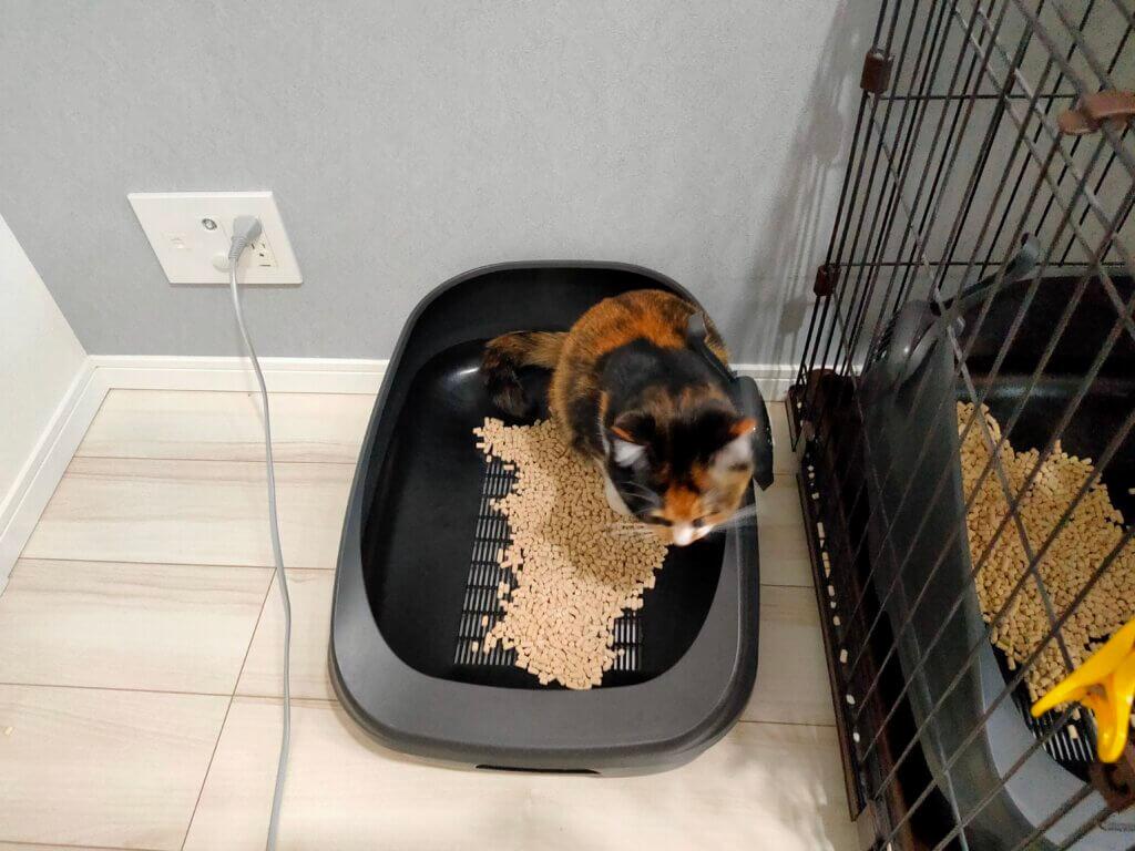 猫 おしっこシート キラキラ